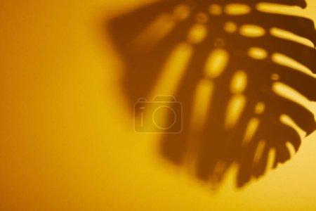 Photo pour Ombre de feuille tropicale sur fond jaune - image libre de droit
