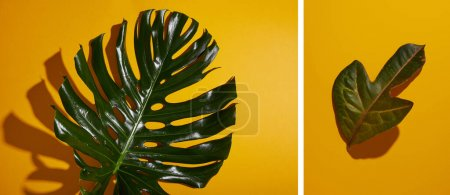 Photo for Collage of tropical green leaves on yellow background - Royalty Free Image