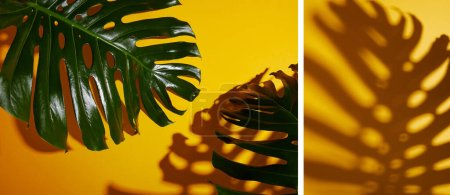 Photo for Collage of tropical green leaves on yellow background with shadow - Royalty Free Image