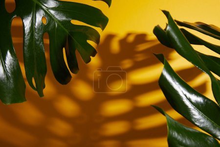 tropical green leaves on yellow background with shadow