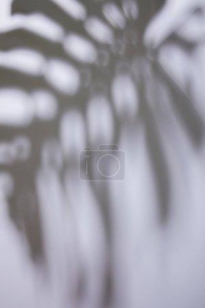 Photo pour Ombre de feuille tropicale sur fond blanc - image libre de droit
