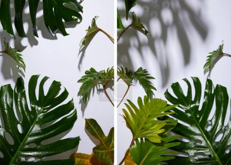 Foto de Collage of fresh tropical green leaves on white background with shadow. - Imagen libre de derechos