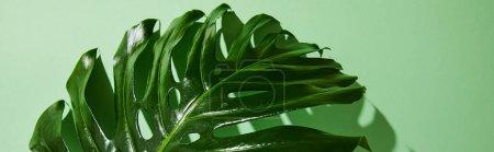 Photo pour Vue rapprochée de feuilles tropicales fraîches sur fond vert avec ombre, vue panoramique - image libre de droit