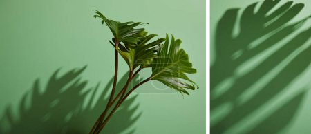 Photo for Collage of fresh tropical green leaves on green background with shadow - Royalty Free Image