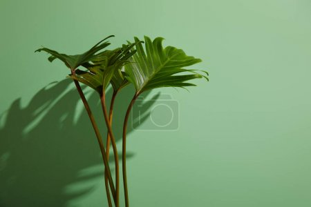 fresh tropical green leaves on green background with shadow