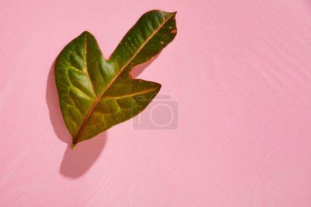 Photo pour Vue de dessus de la feuille verte tropicale fraîche sur fond plastique rose - image libre de droit