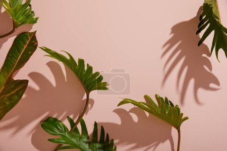 Photo for Fresh tropical green leaves on pink background - Royalty Free Image
