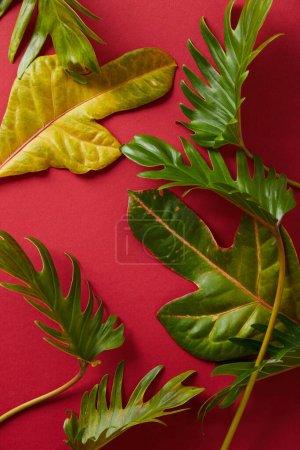 Photo pour Vue de dessus des feuilles vertes tropicales sur fond rouge - image libre de droit