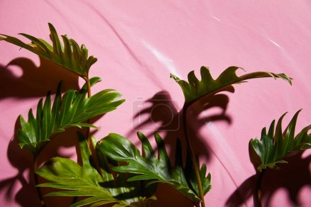 Photo for Top view of fresh tropical green leaves on pink plastic background - Royalty Free Image