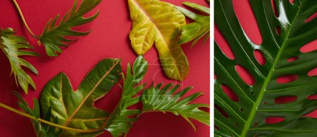 Photo for Collage of tropical green leaves on red background - Royalty Free Image