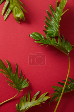 Photo for Top view of tropical green leaves on red background - Royalty Free Image