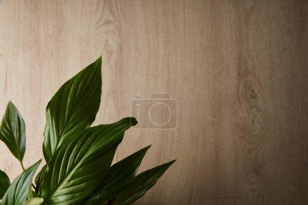 Photo pour Vue de dessus des feuilles vertes sur fond beige bois - image libre de droit