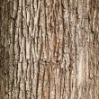 Background of bark texture in natural light...