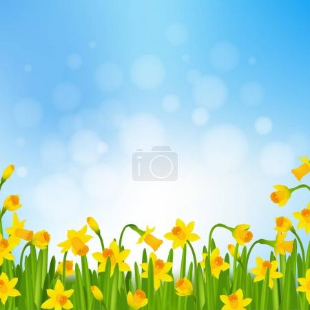 Illustration for Spring Post Card With Narcissus, Vector Illustration - Royalty Free Image