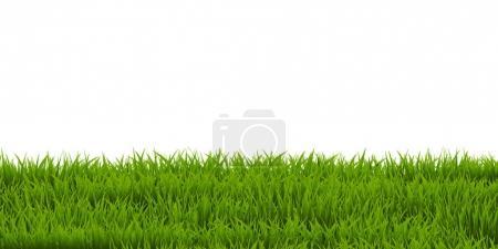 Green Grass backgrpond