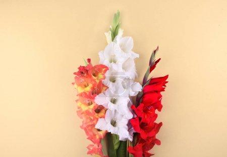 Photo pour Belles fleurs de gladiole sur fond jaune. Style de pose plat avec place pour votre texte . - image libre de droit