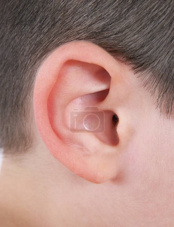 Photo for A closeup of human ear - Royalty Free Image