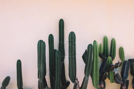 Green mexican cactuses