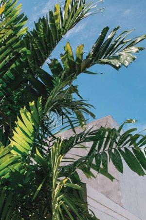 lush green palm leaves