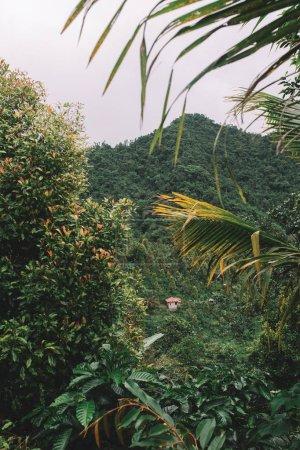 lush green bushes