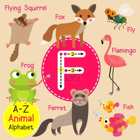 Cute children zoo alphabet F letter tracing of funny animal cartoon for kids learning English vocabulary vector illustration.