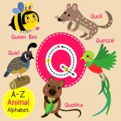 Cute children zoo alphabet Q letter tracing of funny animal cartoon for kids learning English vocabulary vector illustration.