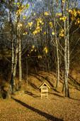 Large bird feeder in autumn birch forest. Autumn landscape.