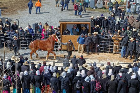 The Crowd Watches at Horse Auction