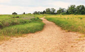 Sandy trail through a grassy area