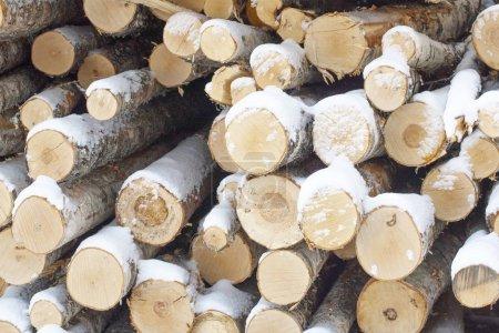 Photo pour Tas de rondins couverts de neige - image libre de droit