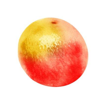 Photo pour Aquarelle citrus sur millefeuille - image libre de droit