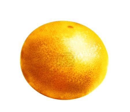 Photo pour Aquarelle orange sur blanc - image libre de droit