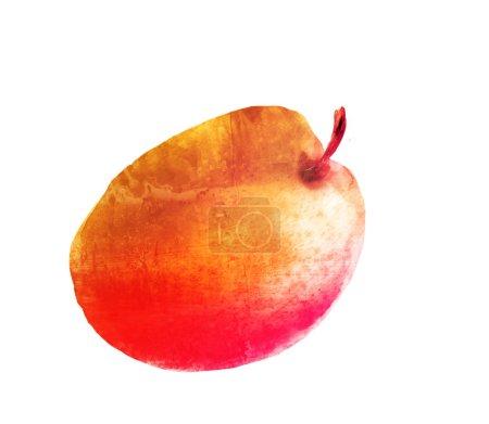 Photo pour Aquarelle abricot sur blanc - image libre de droit