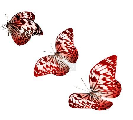 Photo pour Couleurs papillons isolé sur fond blanc - image libre de droit