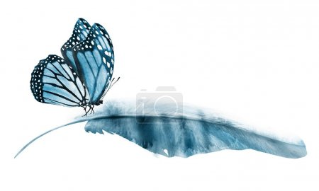 Photo for Watercolor feathers with butterfly, isolated on white background - Royalty Free Image