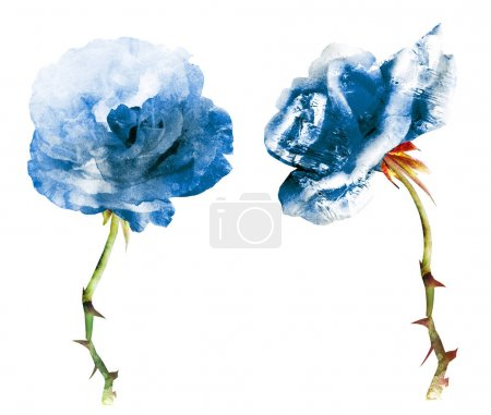 Photo for Watercolor flowers isolated on white background - Royalty Free Image