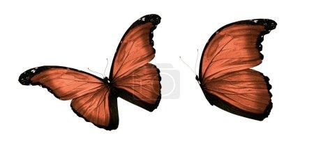 Photo pour Papillons de couleur, d'isolement sur le fond blanc - image libre de droit