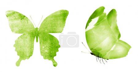Photo pour Deux papillons à l'aquarelle, isolés sur fond blanc - image libre de droit