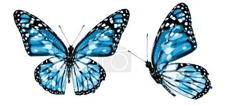 Photo pour Papillons de couleur, isolés sur fond blanc - image libre de droit