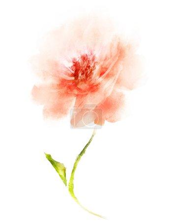 Photo pour Fleur aquarelle, isolée sur fond blanc - image libre de droit