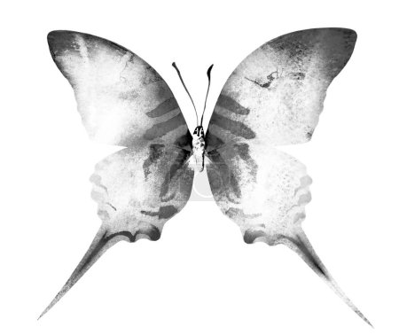 Watercolor butterfly , isolated on white background. Black and w