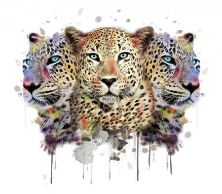 Three wild leopards