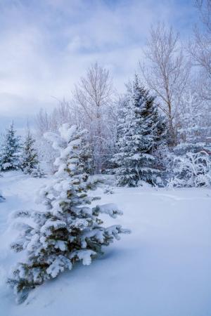 Photo pour Neige et le gel couvert des arbres en hiver à une froide journée d'hiver. - image libre de droit