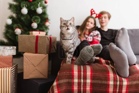 Close up photo of beautiful cat standing on sofa at home with pretty couple on background