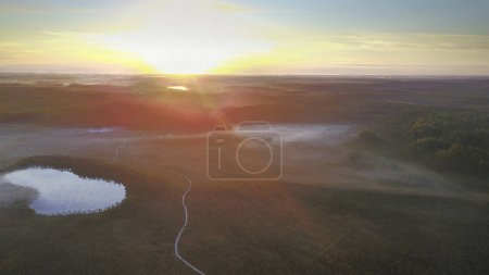 Photo pour Vue aérienne de la forêt de pins avec piste faite depuis un drone de randonnée - image libre de droit
