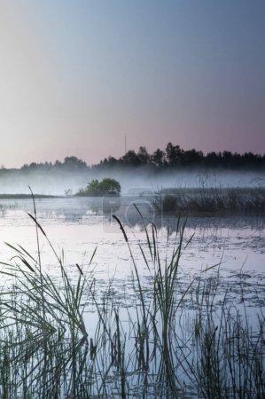 Photo pour Marais brumeux près de la forêt au lever du soleil - image libre de droit