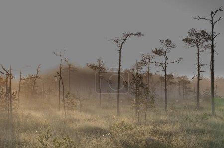 Photo pour Forêt brumeuse mystérieuse pendant le coucher du soleil - image libre de droit