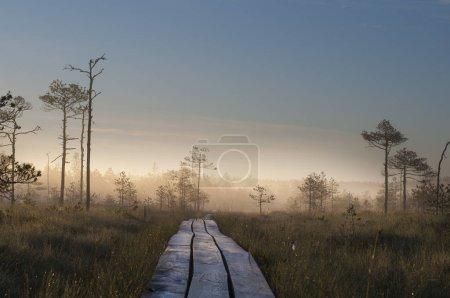 Photo pour Chemin en bois dans une forêt brumeuse pendant le coucher du soleil - image libre de droit