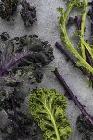 Photo for Close up view of fresh kale leaves - Royalty Free Image