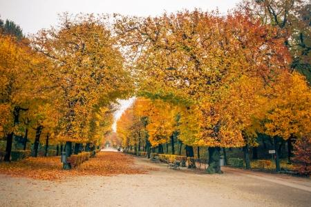Schoenbrunn park alley with arched trees with bright bright yell